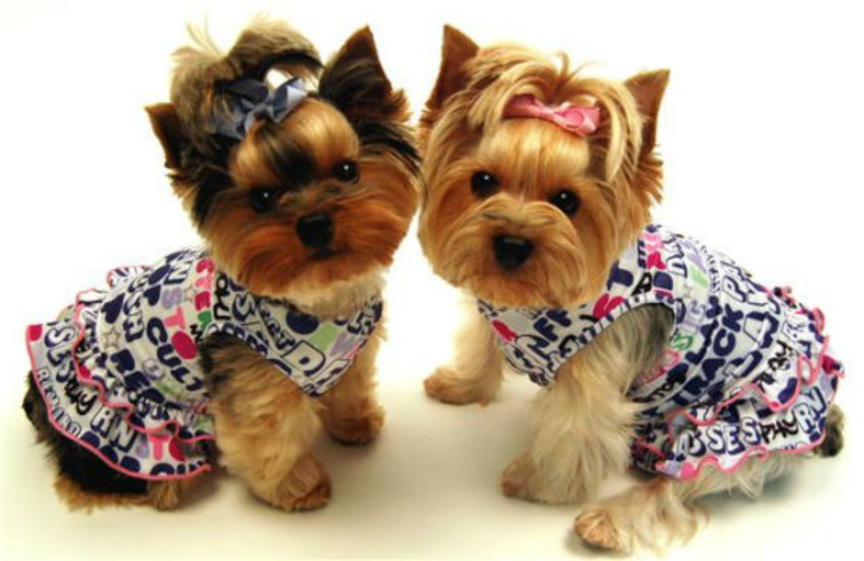 Je oblačenje psov preseglo meje zdravega razuma?