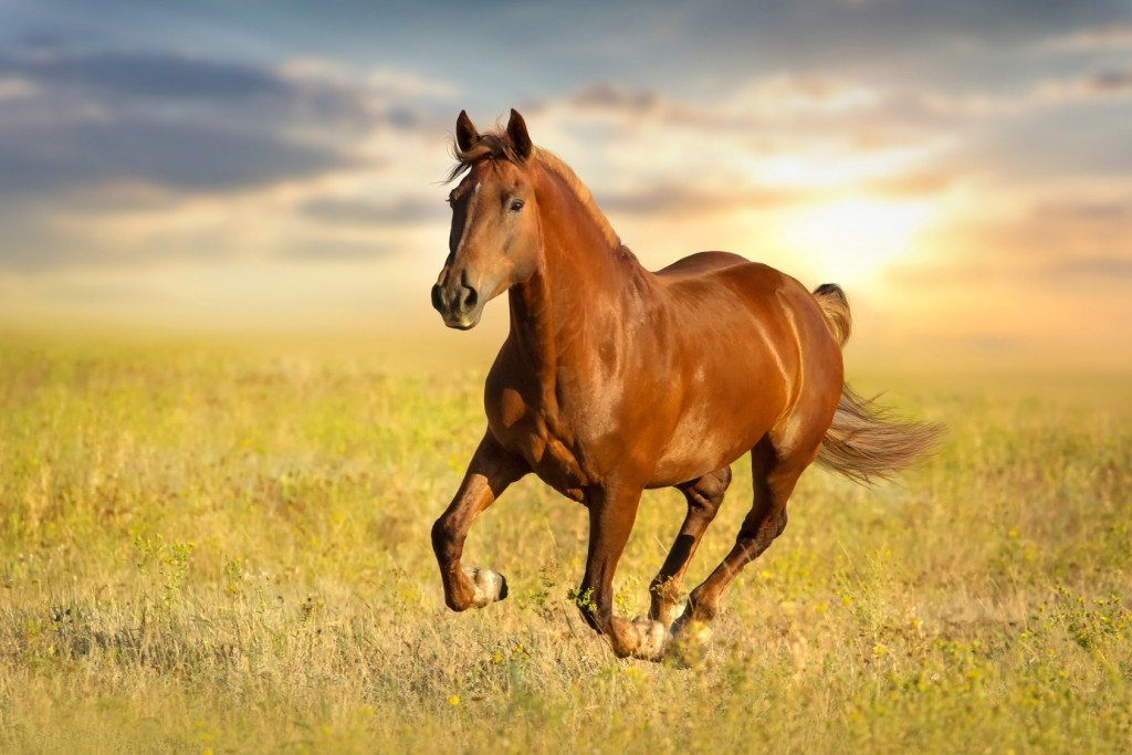 Šala dneva: Žrebec