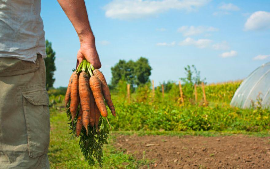 Si naš kmet zasluži vzpodbudo za delo na svoji hribovski kmetiji?