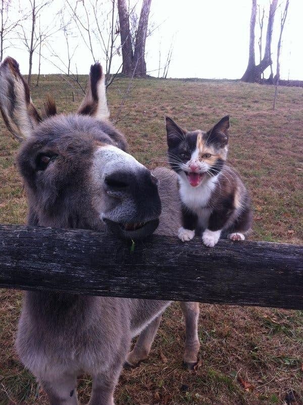 Maček ali osel, saj je vseeno ...