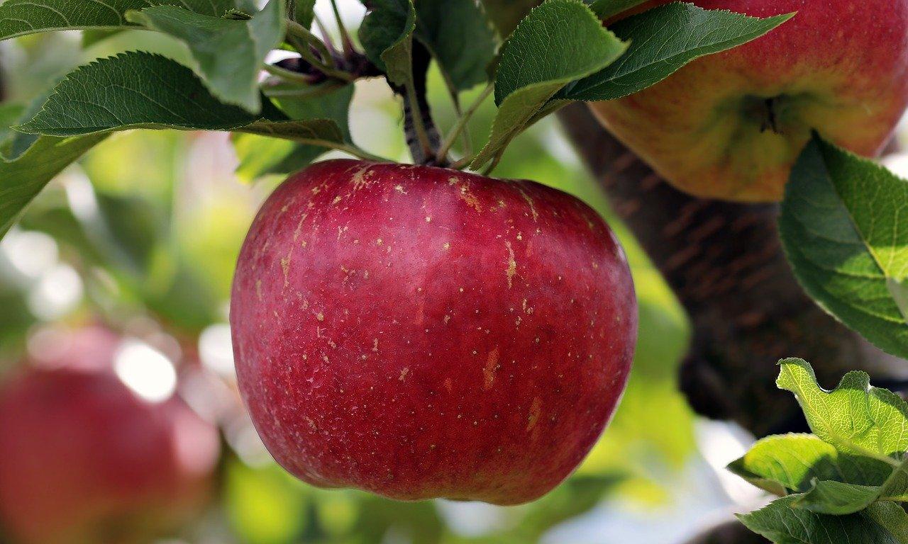 Šala dneva: Jabolko