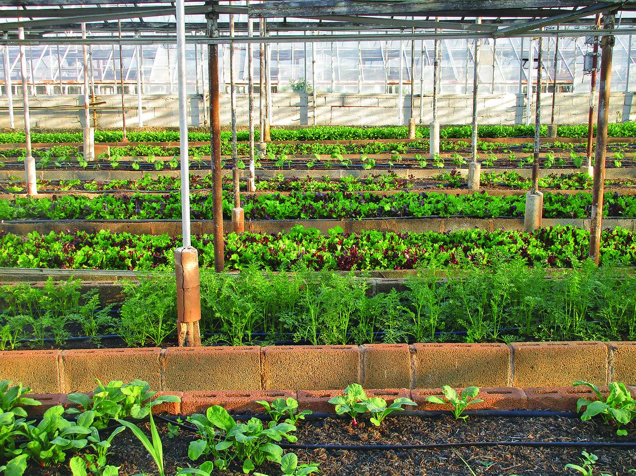 Sodobno ekološko kmetijstvo