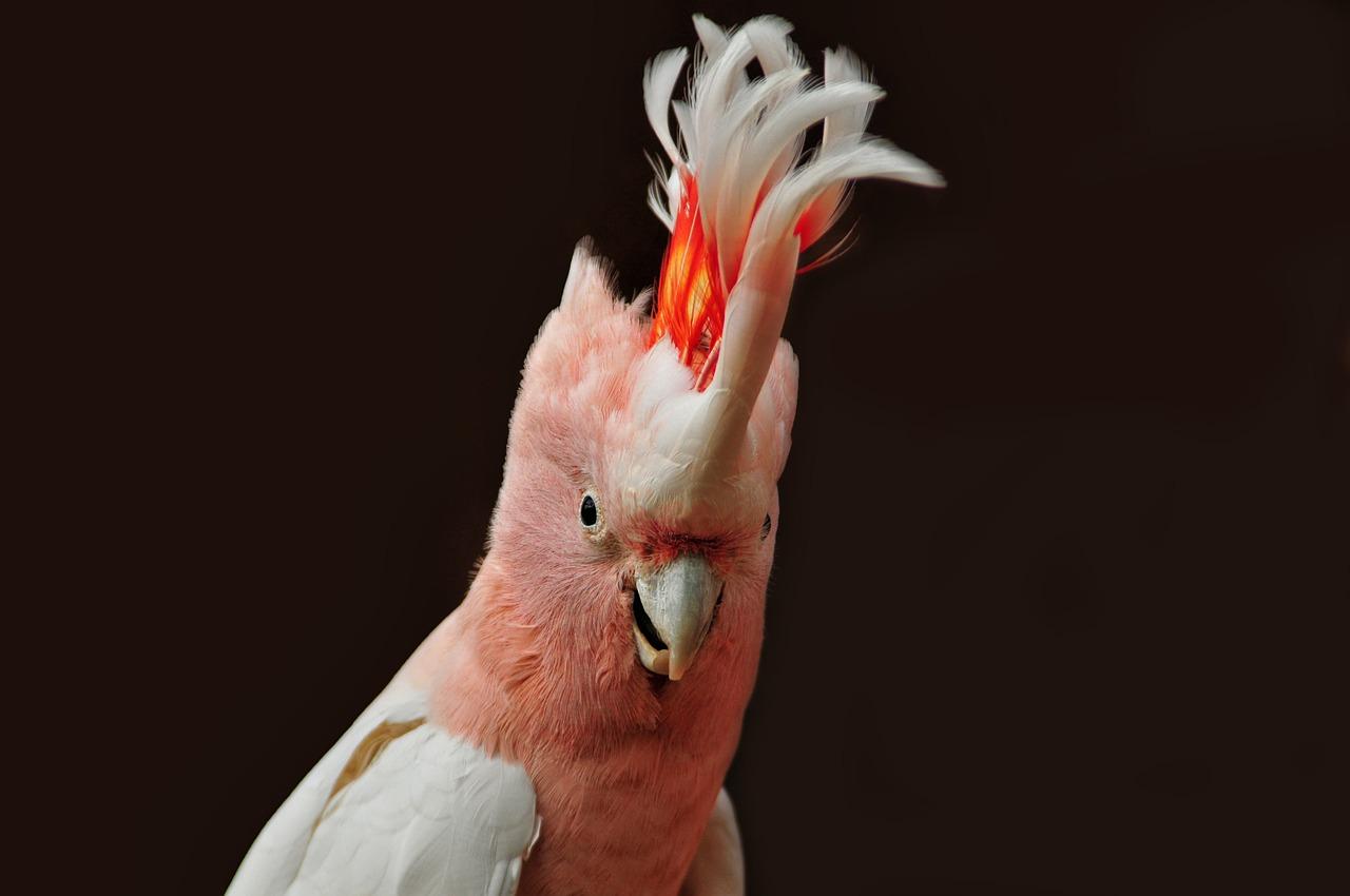 Šala dneva: Papiga