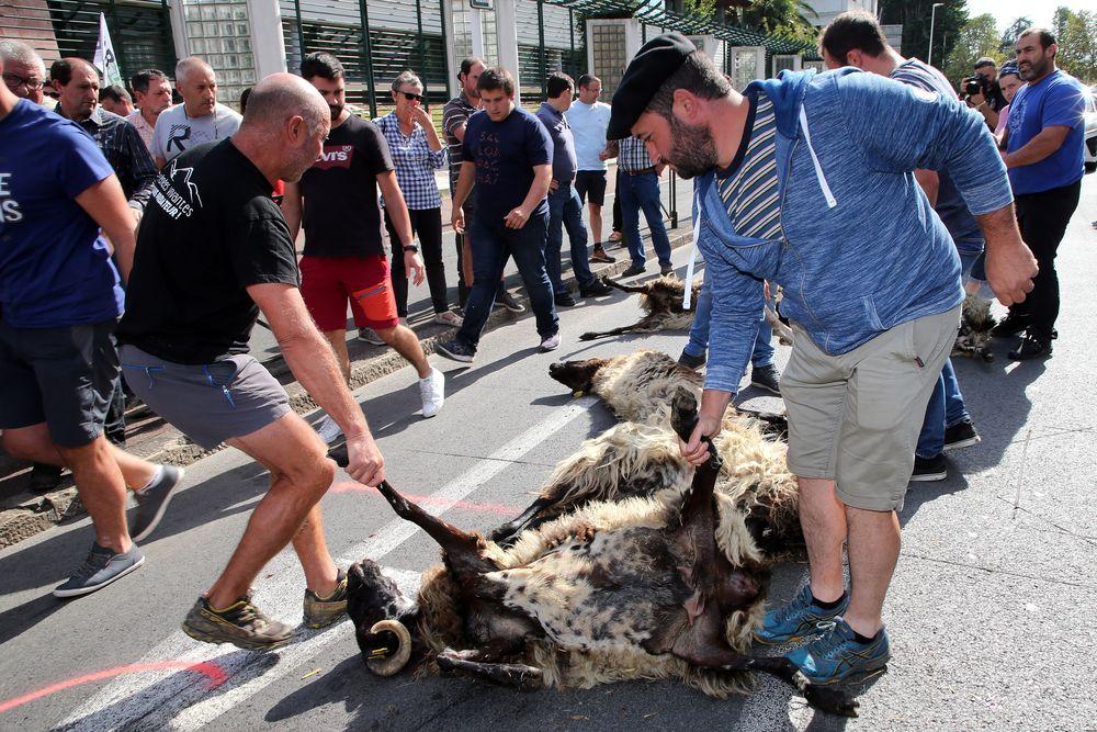 Francija proti medvedom, Nemčija dovolila odstrel na domačem dvorišču, le v Sloveniji so zveri več vredne kot državljani
