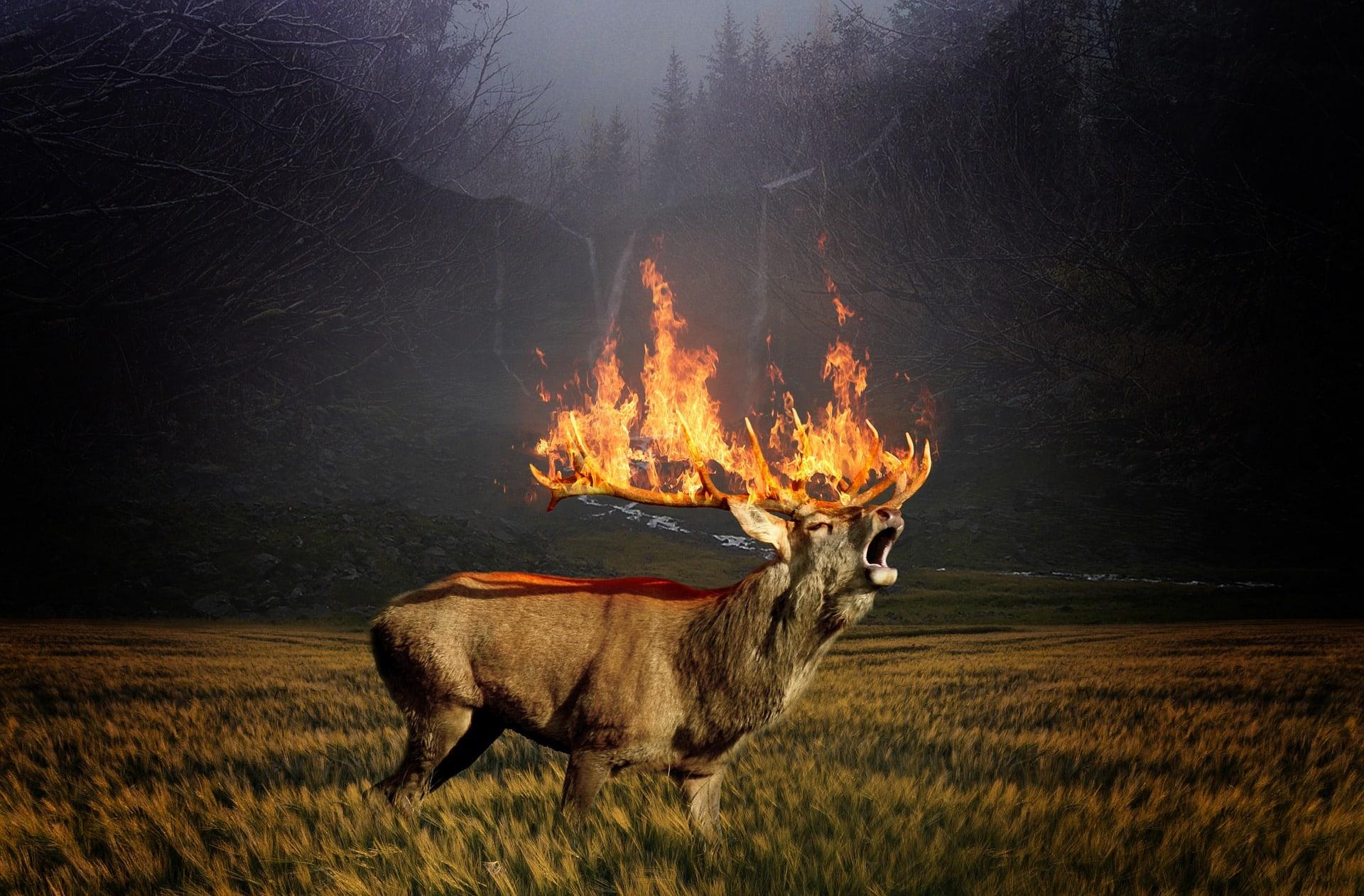 Ekstremni požari vsako leto divjajo pogosteje in trajajo dlje