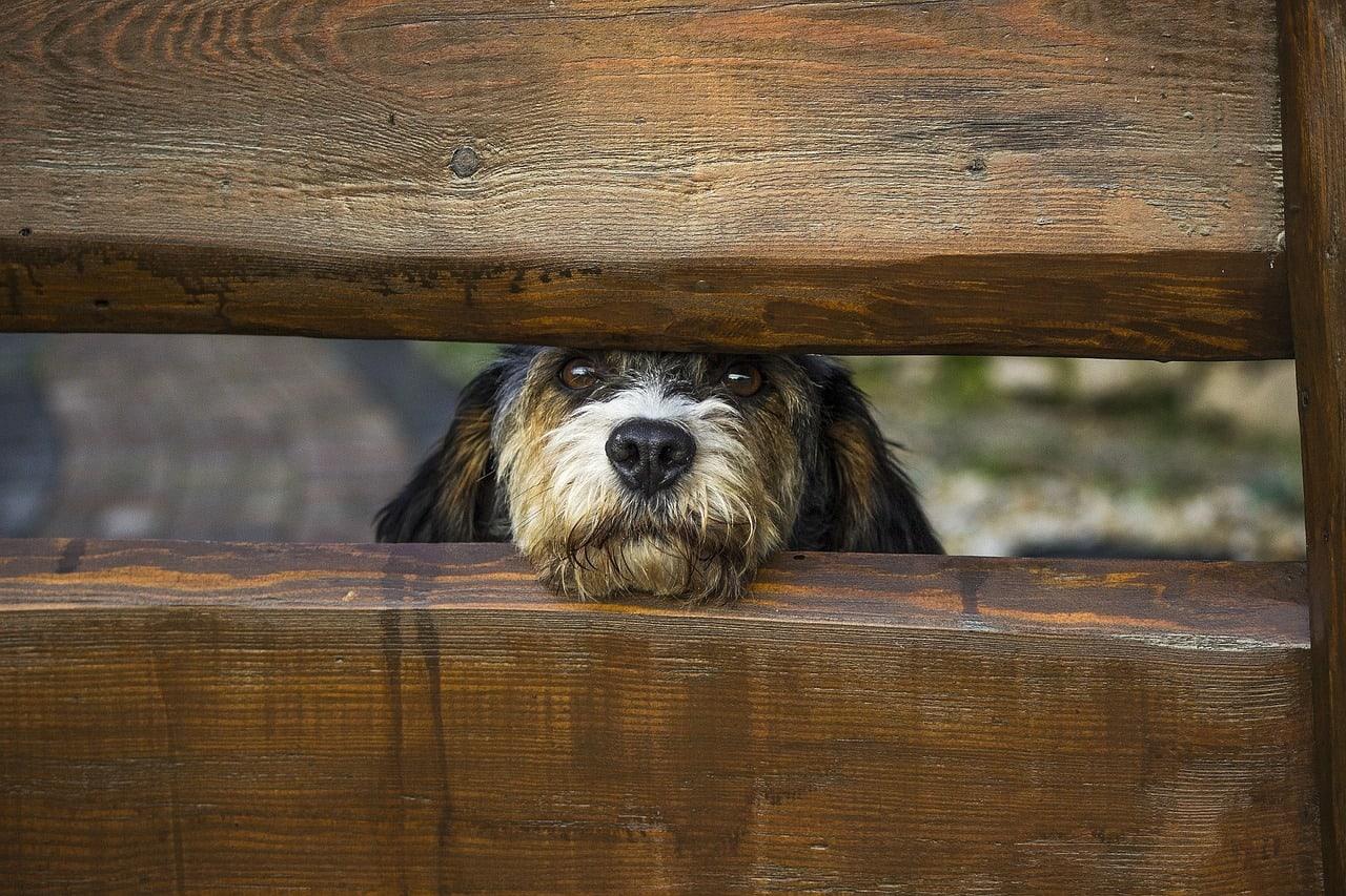 Šala dneva: Sosedov pes