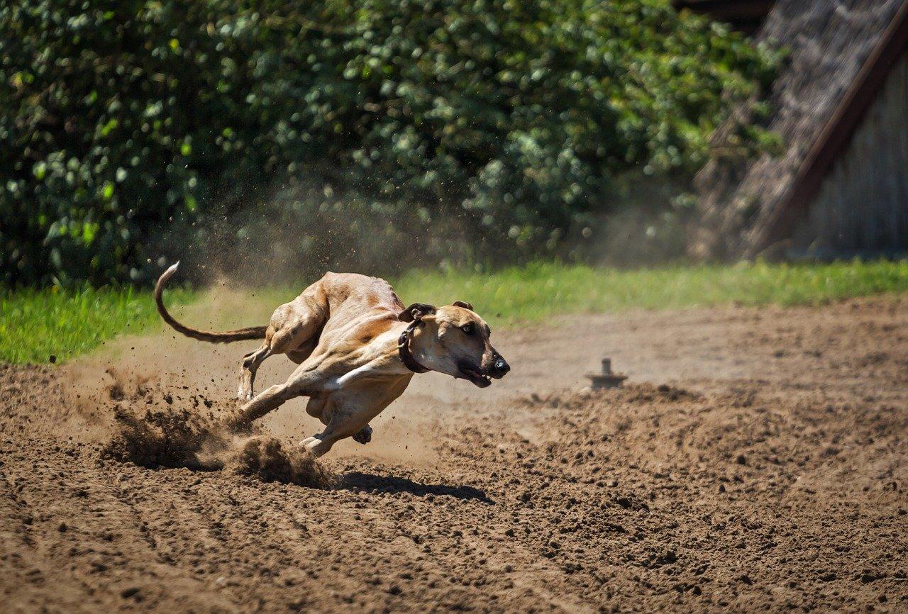 Šala dneva: Lovski pes