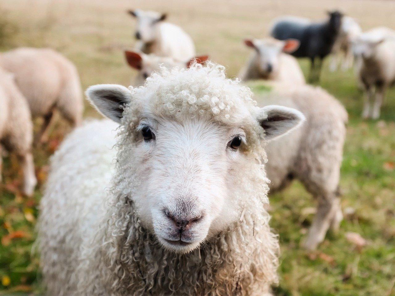 Kmetijsko gospodarstvo – kmetij je v Sloveniji čedalje manj