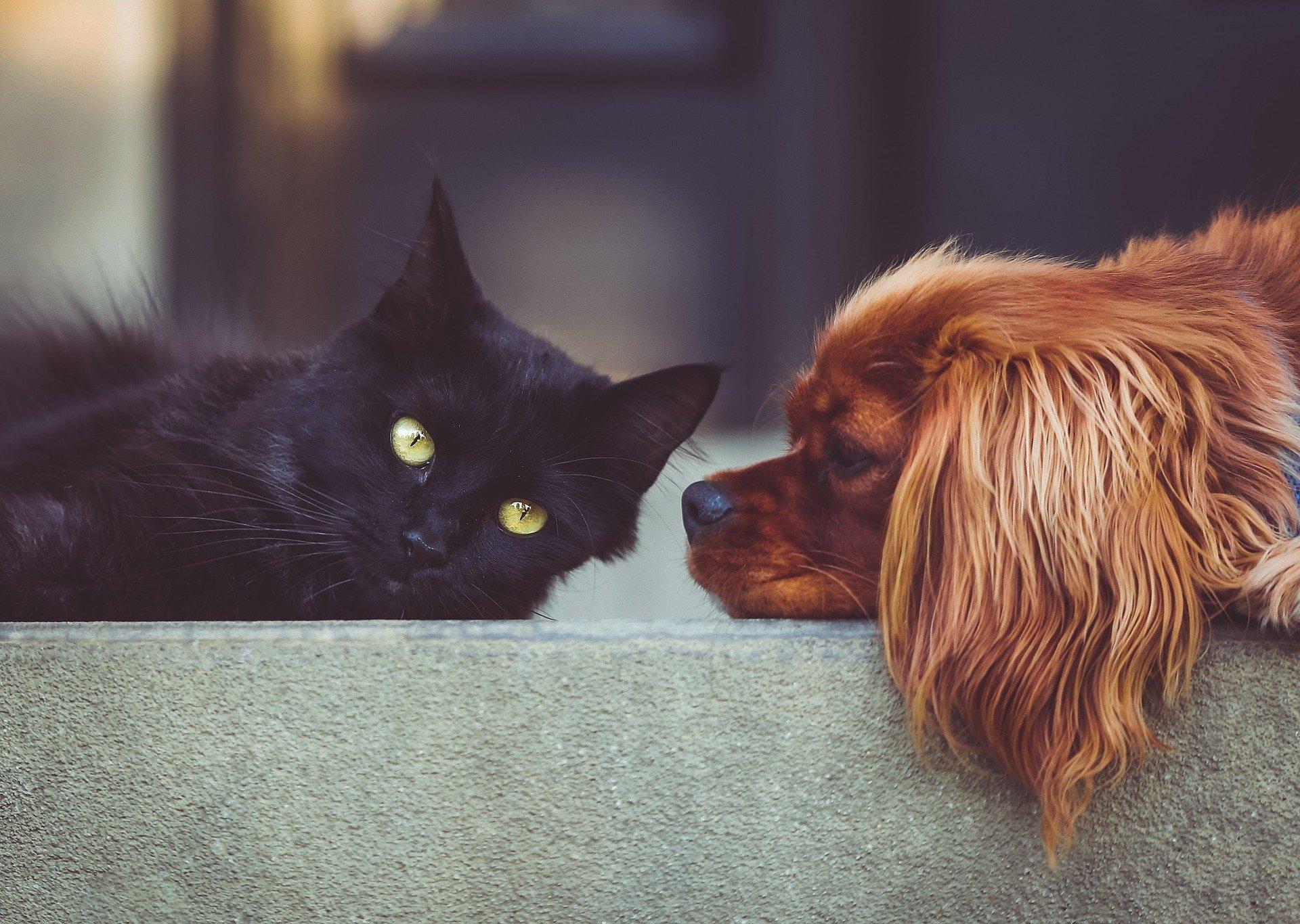 Hišni ljubljenčki prenašajo ljubezen, koronavirusa pa ne