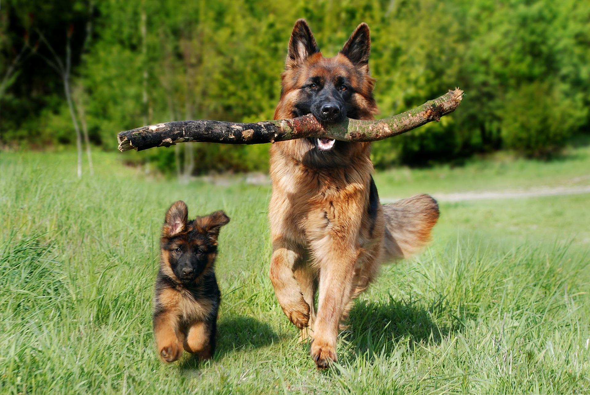 Če ne moreš pobrati iztrebka, ne moreš imeti psa