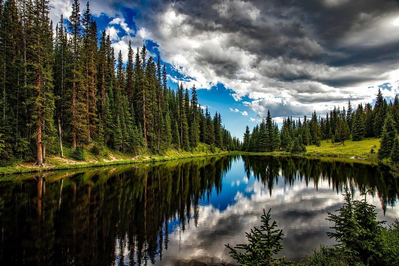 Gozdno gospodarstvo in novitete