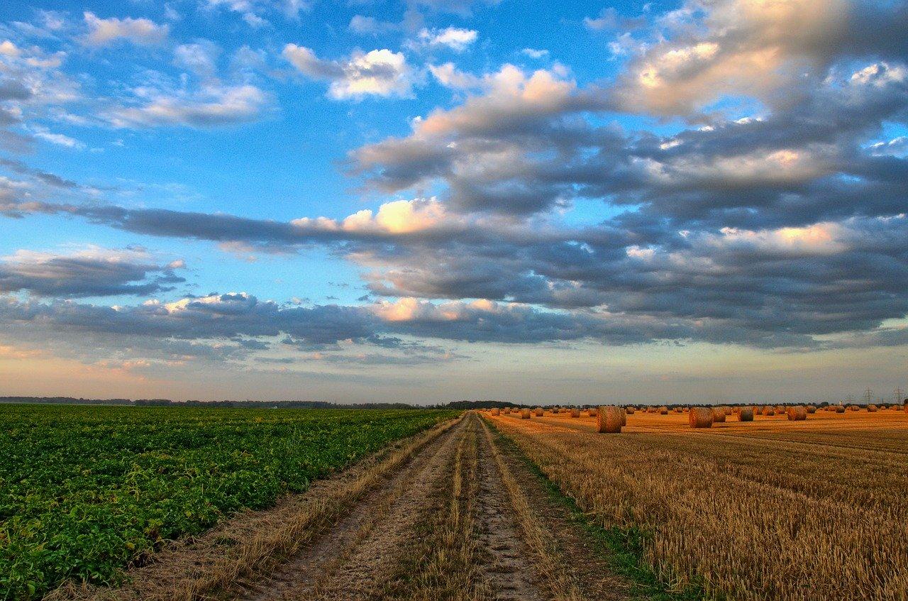 Poljedelstvo in njegov vpliv na okolje