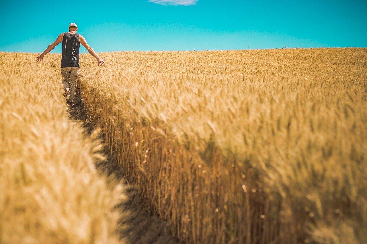Kmet nekoč in danes