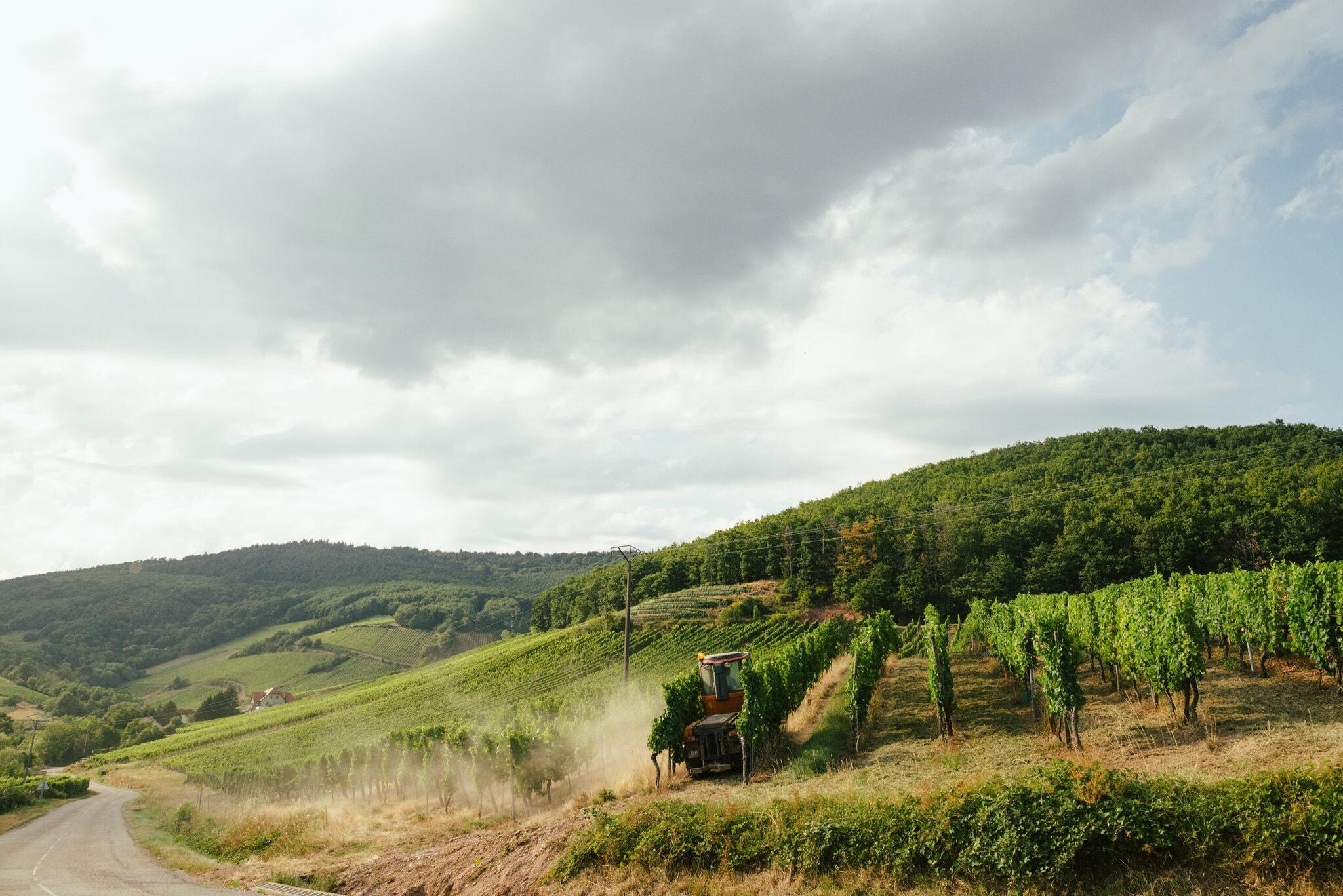 Vinski trg se ruši