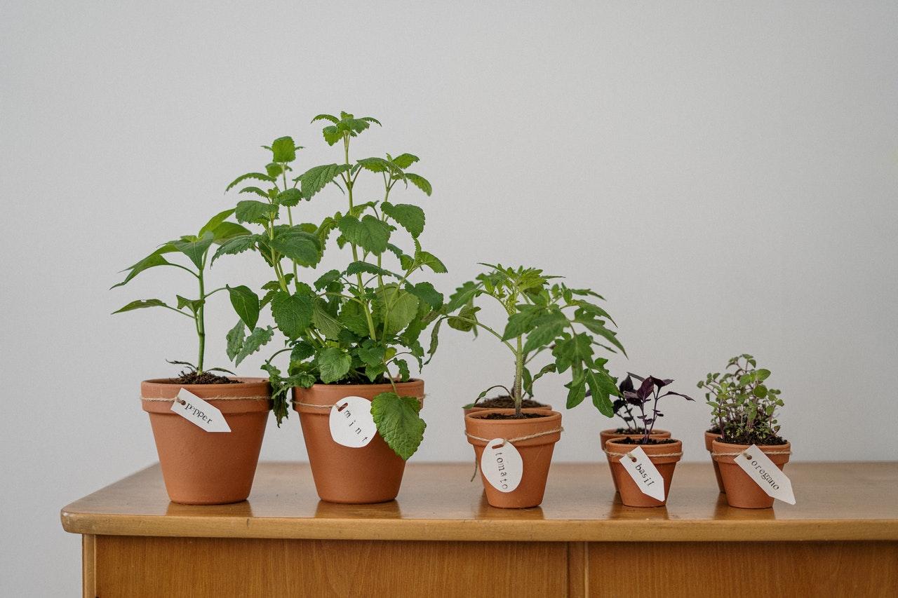 Sedem idej za domače gnojilo