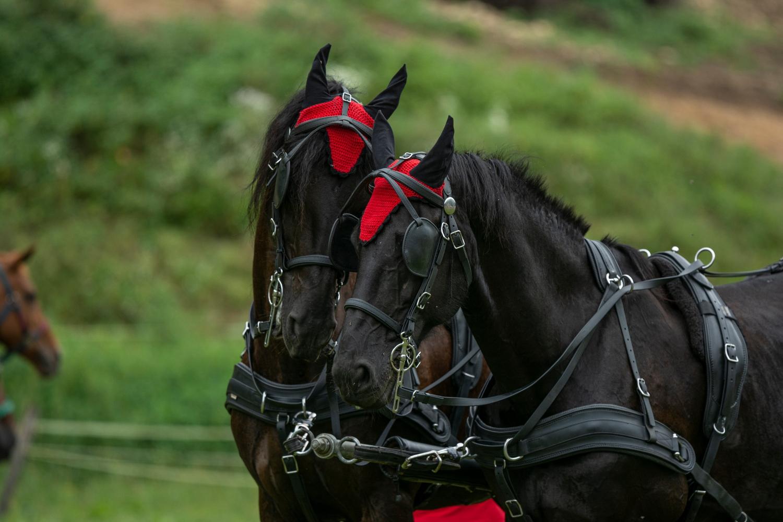 Blagoslov konjev simbolizira izraz trdne vere in ohranjanje tradicije
