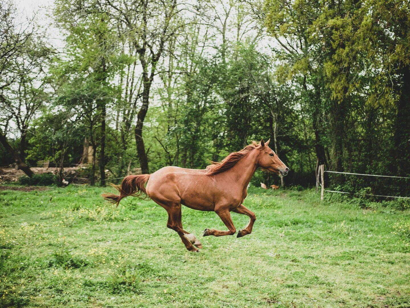 Konje merimo po pedi, ljudi po pameti.