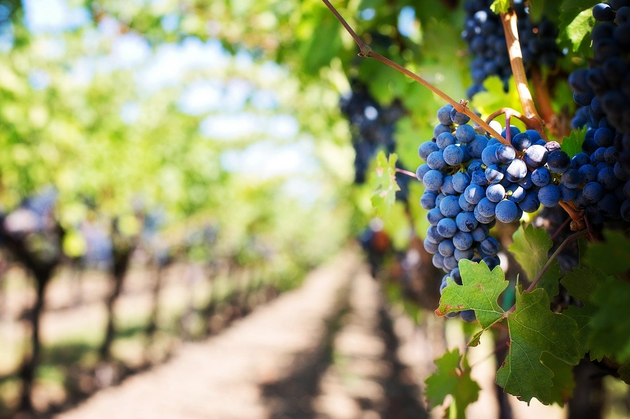 Martinovanje ni povezano le z vinom