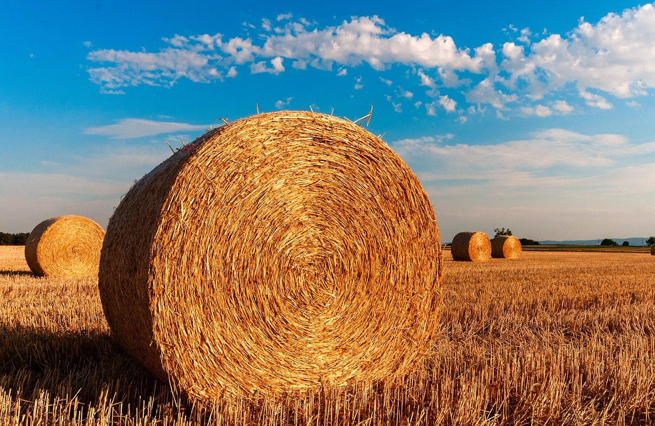 Kam bodo šle milijarde za kmetijstvo: prihodnost je jasna