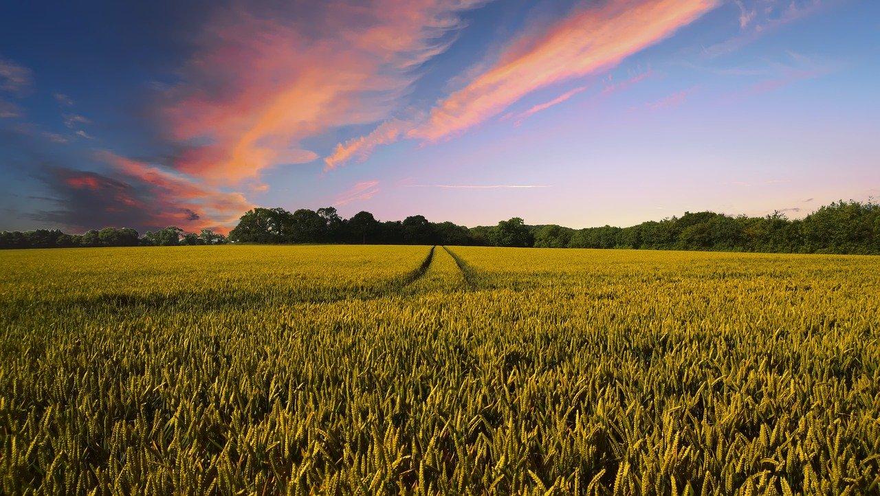 Okoljski aktivisti z Greto Thunberg na čelu so Evropski parlament pozvali, naj zavrne predlagane spremembe evropske skupne kmetijske politike za obdobje 2021-2027.