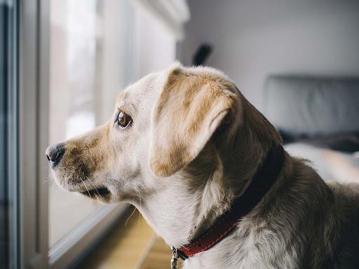 Svetovni dan varstva živali: tudi živali imajo svoje neodtujljive pravice