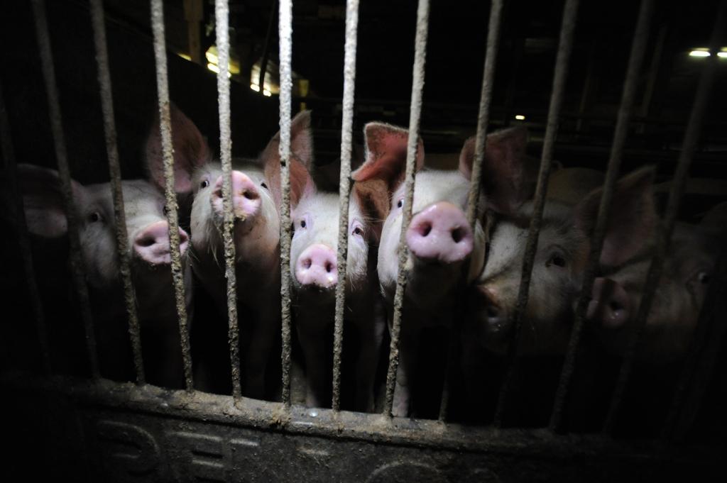 Svetovni dan vegetarijanstva: vegetarijanstvo za živali, okolje in ljudi