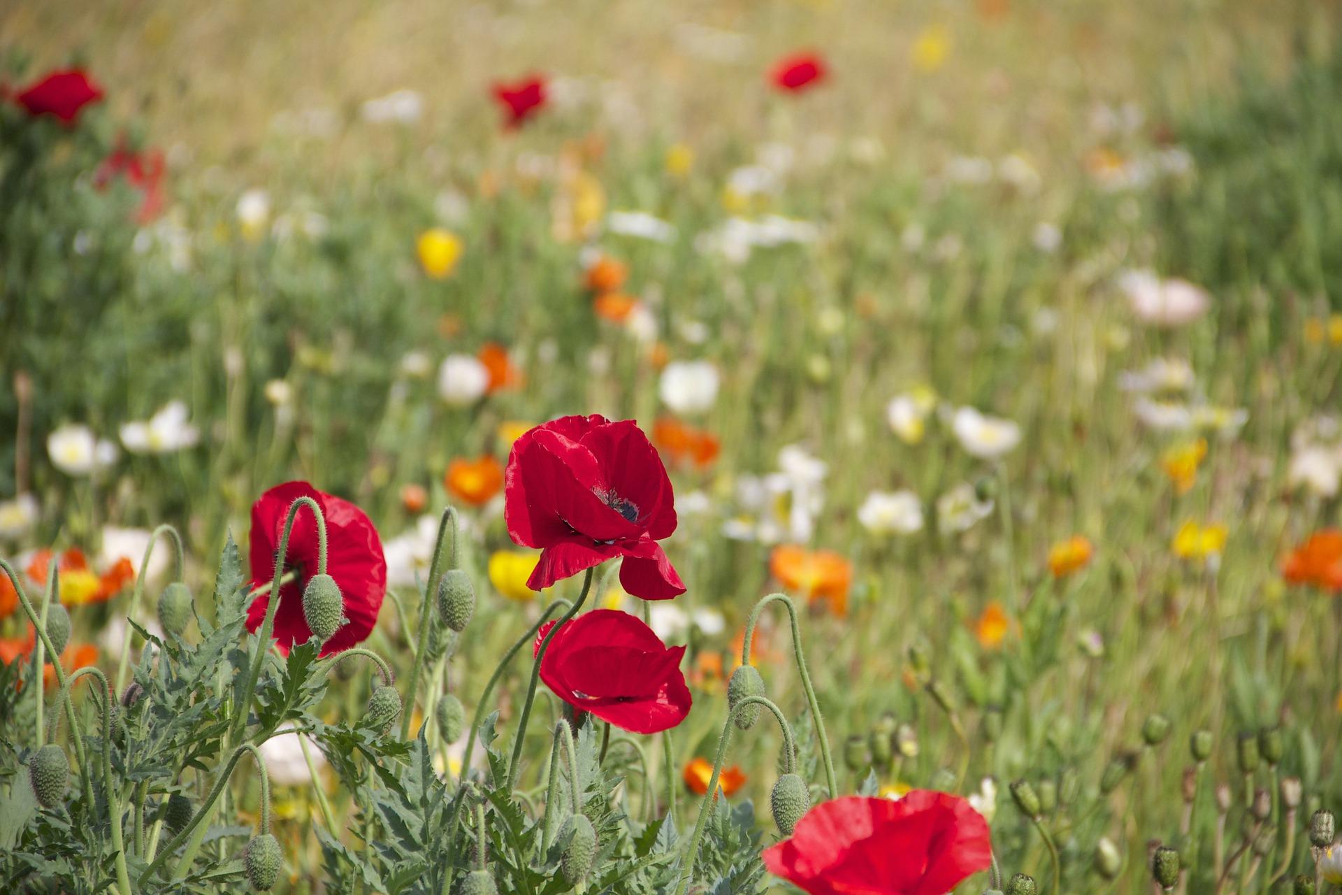 Modrosti Draga Zavraška: zaklad zdravega življenja