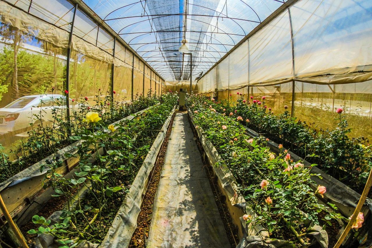 Rastlinjak – deset ugodnosti, ki jih ponuja vaši družini