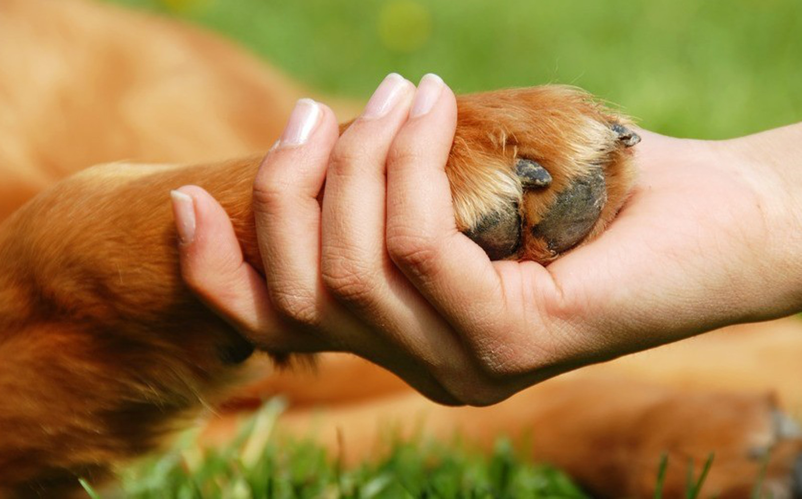 Živali so od marca 2020 uradno čuteča bitja.
