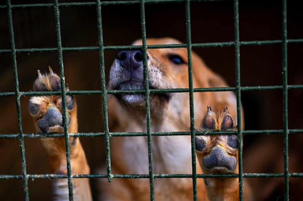 Živali si zaslužijo posebno mesto tudi v kazenskem pravu.