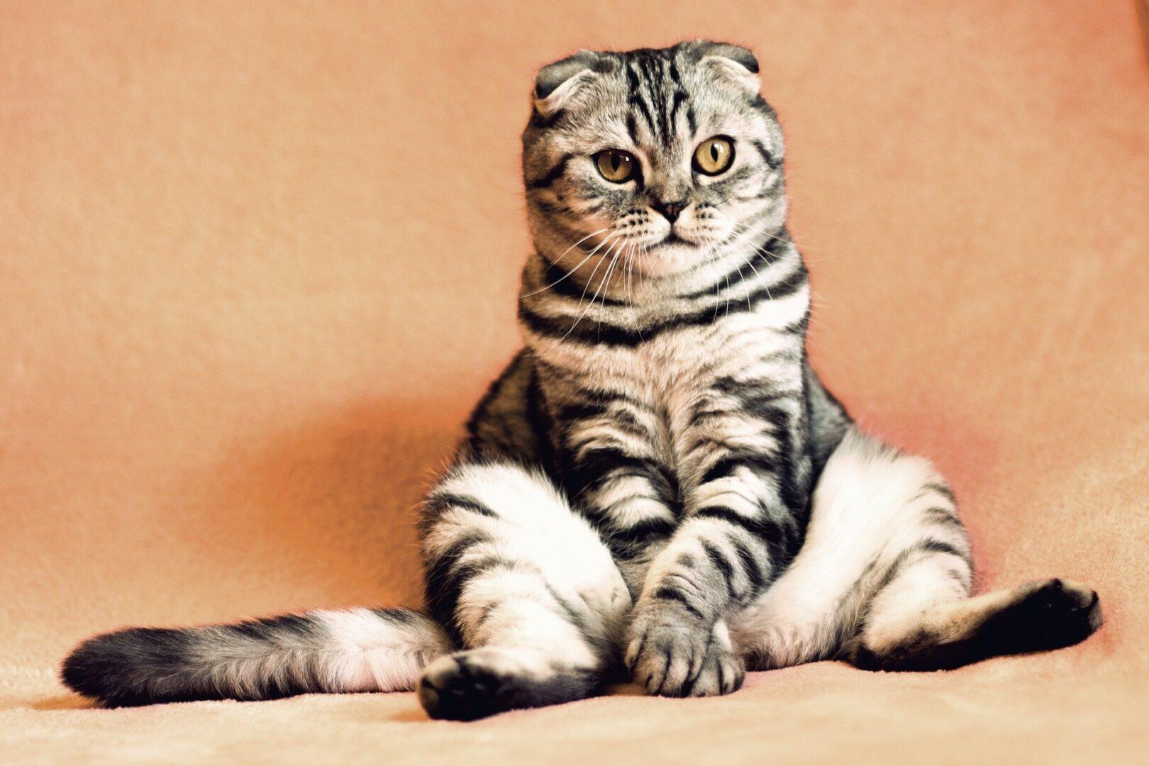Mačka v rokavicah miši ne lovi.