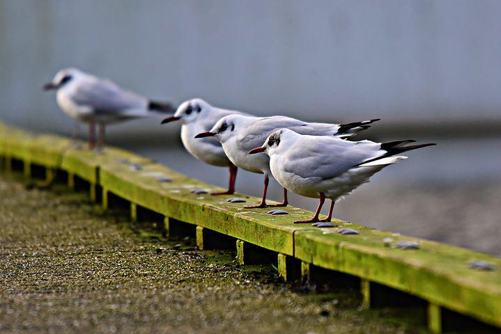Zakaj je ptiča tako težko prepričati, da je svoboden in da lahko leti?