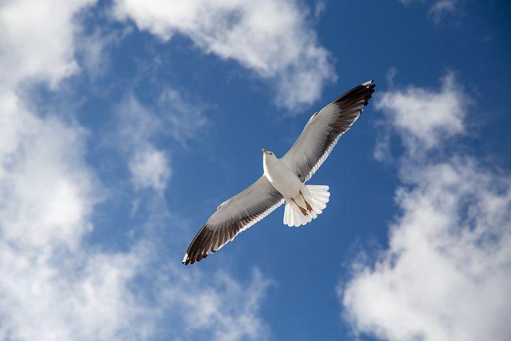 Zgodba za lepši dan: Najdlje vidi galeb, ki najvišje leti