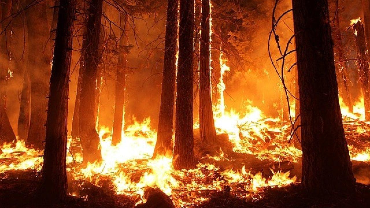 Če bi nevoščljivost gorela, ne bi bilo gozdov.