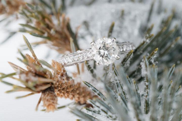 Zgodba za lahko noč: Božični čudež v gozdu