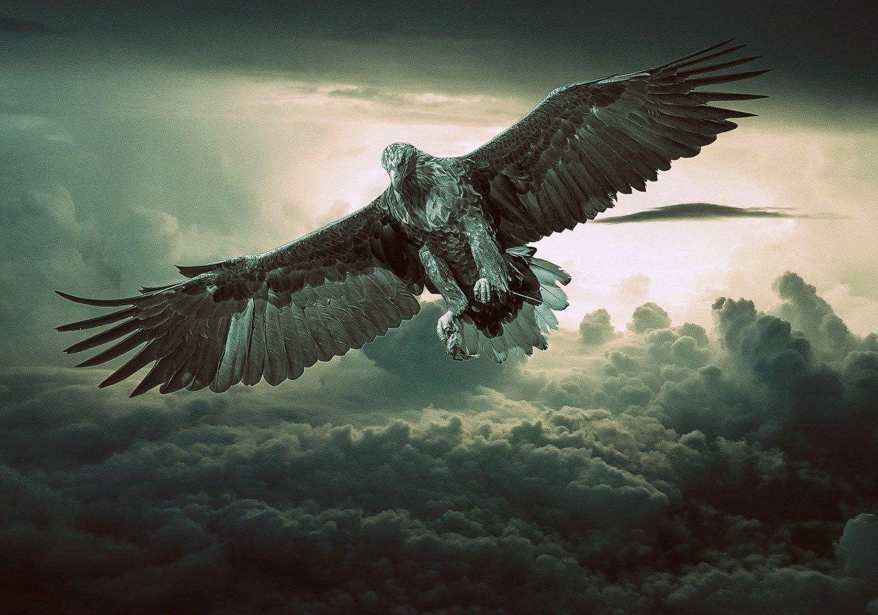 Zgodba za lepši dan: Zgodba o zlatem orlu