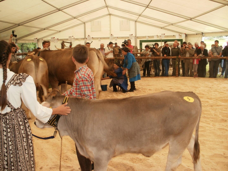 Pandemija koronavirusa nam je dala nov pogled na razvojna vprašanja prireje goveda.