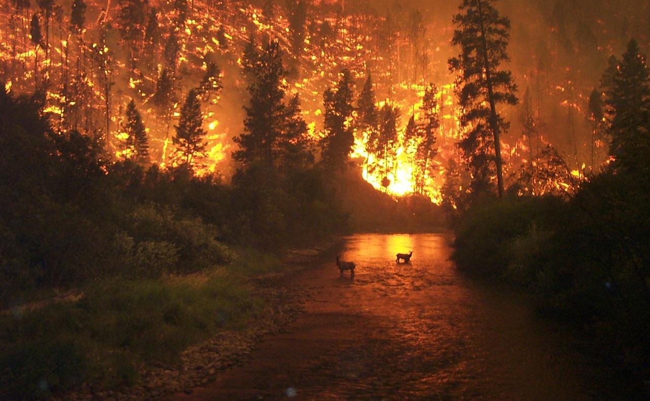Zakaj pomoč za naravne nesreče ne pride do tistih, ki jo potrebujejo?