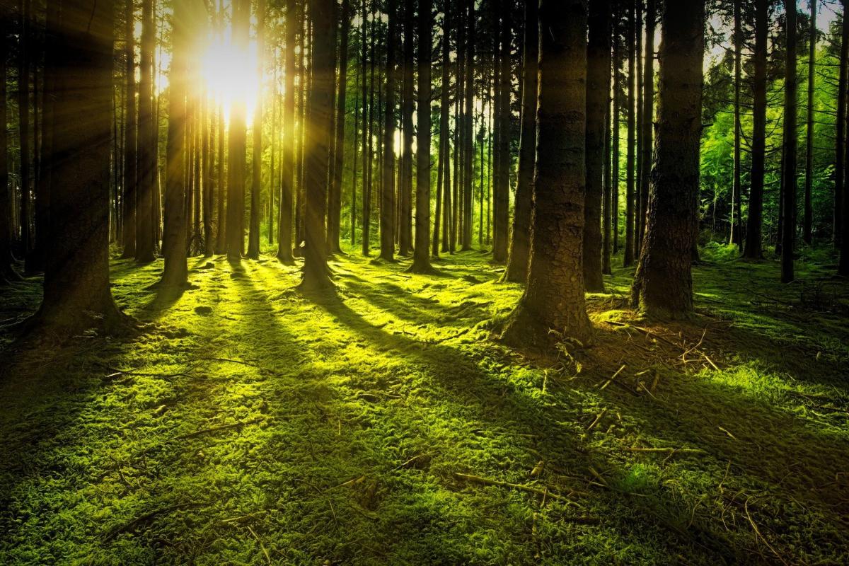 Kljub temu, da Slovenijo pokriva 60 % gozda, je lesarska in gozdarska dejavnost zamrla, je pozabljena in nič več cenjena. Vir slike: Pixabay.