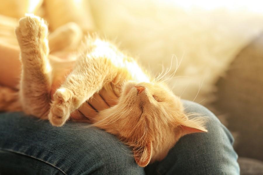Predenje je koristno tako za vašo mačko kakor tudi za vas.