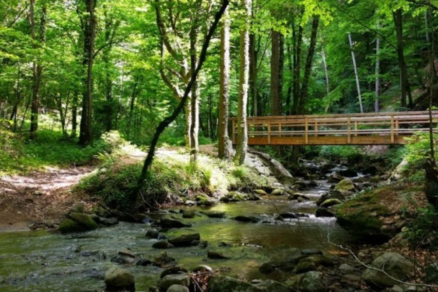 Bistriški vintgar je slikovita dolina, ki jo je ustvaril potok Bistrica. Vir slike: bistrican.si. Foto: Amadeja Mlakar.