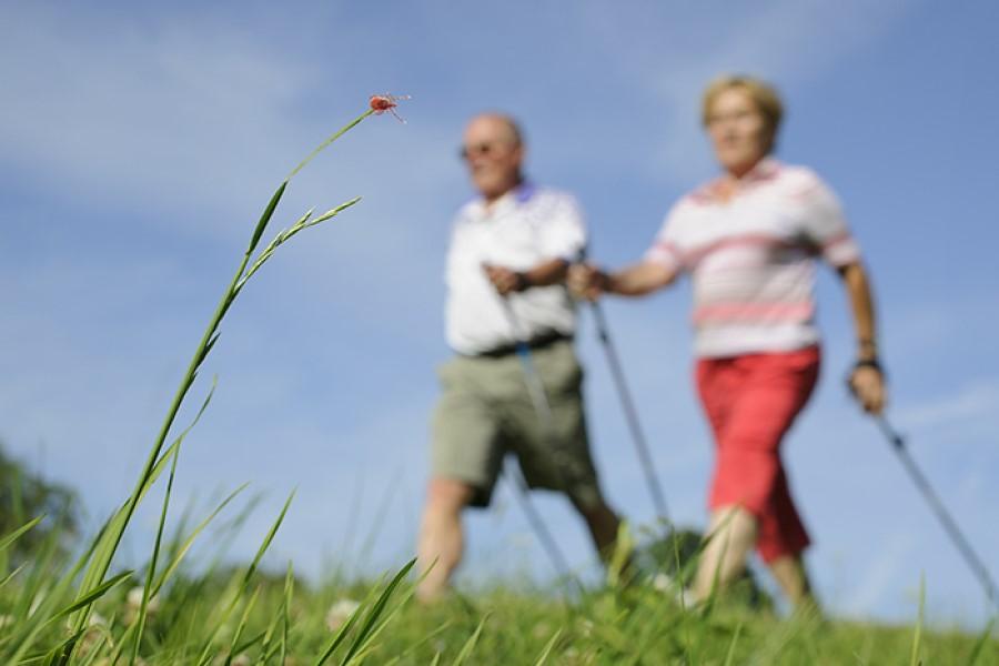 Pomladi je treba poskrbeti za zaščito pred klopnimi boleznimi.