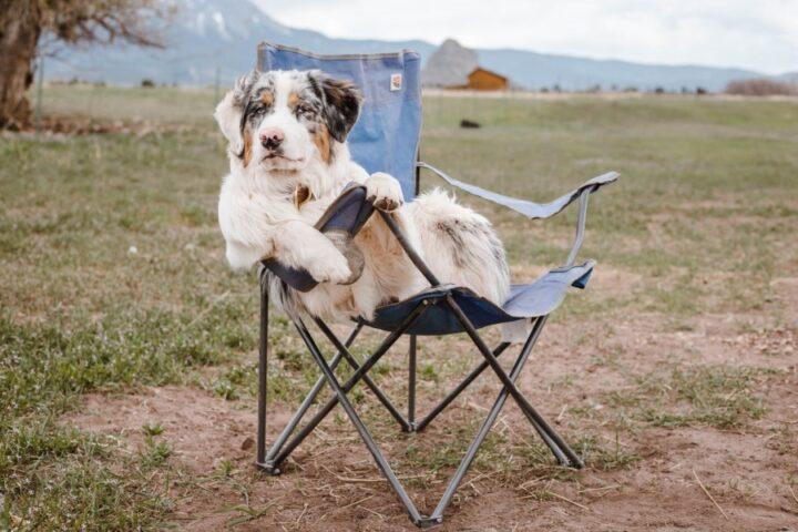 Kaj morate vedeti preden se odpravite na kampiranje s psom