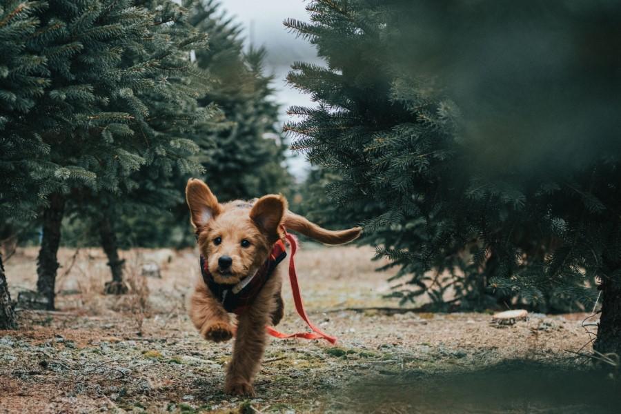 Poskrbite za varno kampiranje s psom.