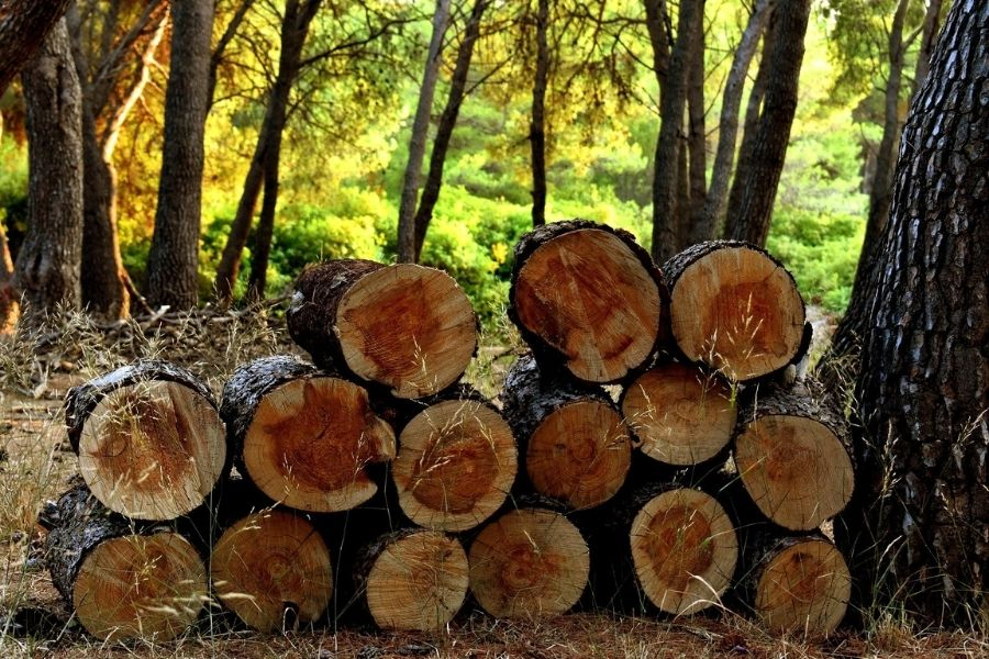 Slovenija ima veliko lesa, ki ga z malo energije in brez onesnaževanja lahko predelamo v vrhunske izdelke z veliko dodano vrednostjo. Vir slike: Pixabay.