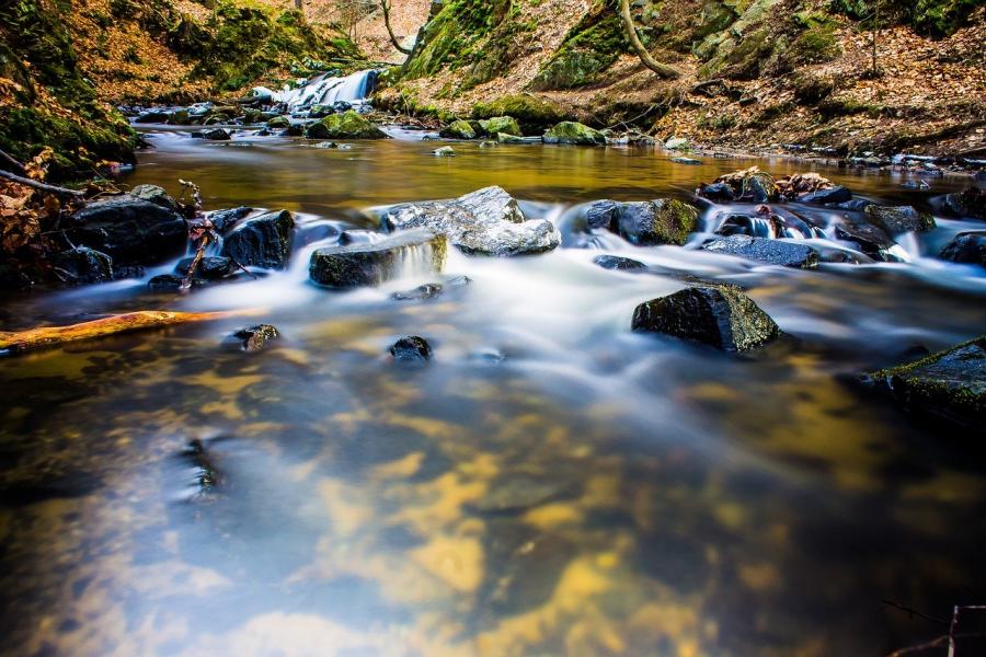 Samo čista voda omogoča preživetje.