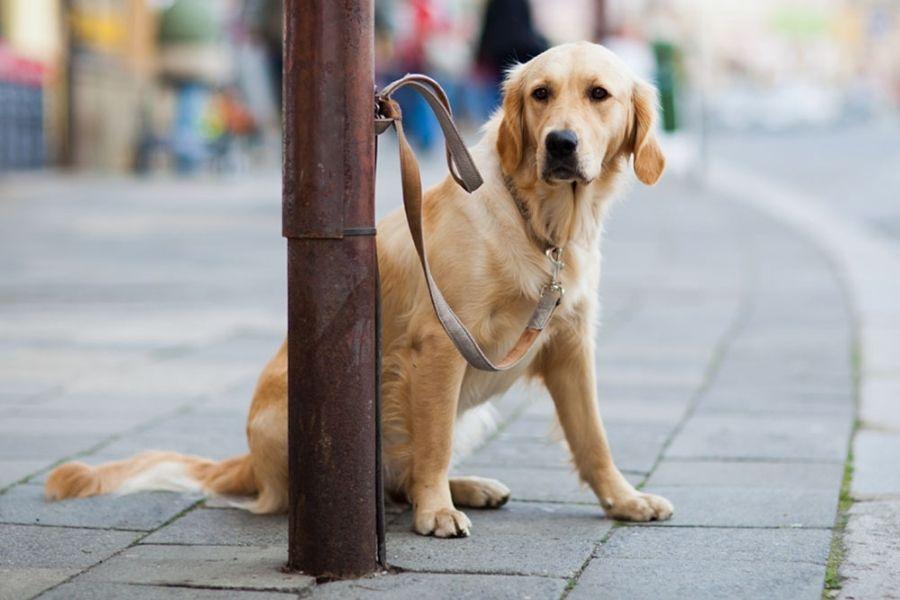 Nekatere trgovine imajo v neposredni bližini vhoda urejen prostor, kjer lahko za čas nakupa psa privežemo, veliko krat pa ta prostor ni ustrezno opremljen. Vir slike: Madpaws.
