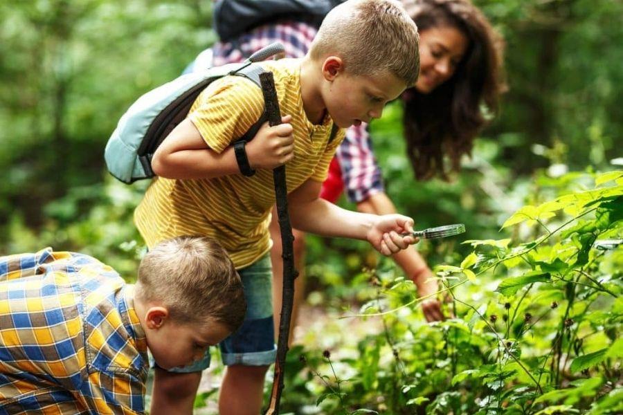 Ob poti se lahko zamotite tudi z nabiranjem sladkih gozdnih sadežev. Vir slike: Getty images.