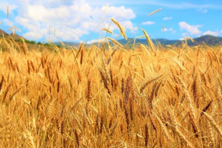 Kakršno seme seješ, tako žito boš žel