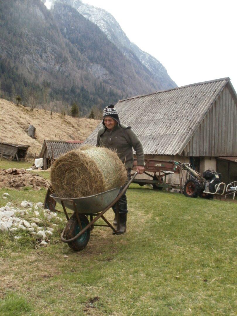 »Gorska« bala planinskega sena zaleže več kot dolinska bala.